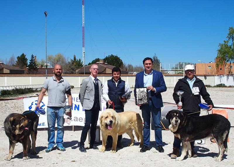 El Ayuntamiento de Cuenca ha colaborado con la organización del VI Concurso Nacional de Mastín Español