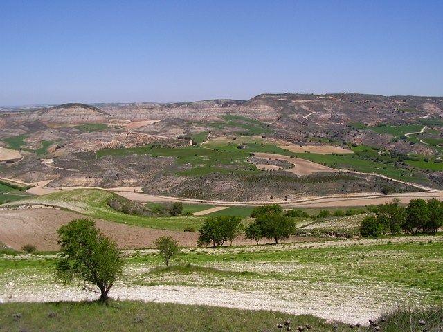 El Ayuntamiento de Huete defenderá el cultivo de la trufa en el próximo pleno