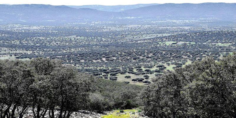 Publicada la aprobación del PRUG del Parque Natural 'Valle de Alcudia y Sierra Madrona', tras un proceso de participación y consenso de todos los interlocutores