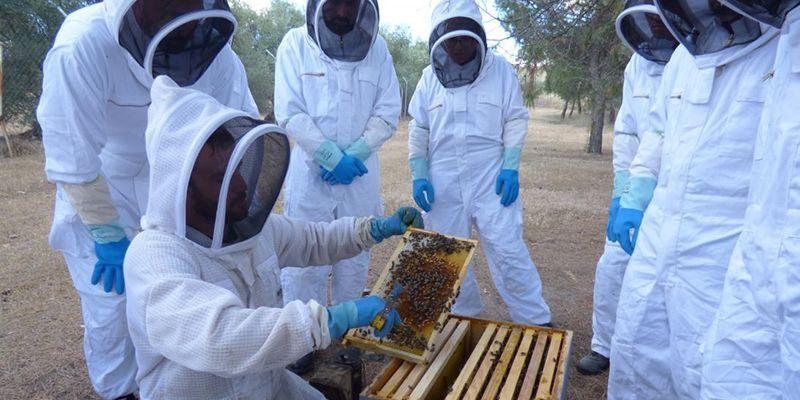 El Gobierno autoriza el inicio del procedimiento para la financiación de proyectos de investigación en el sector apícola