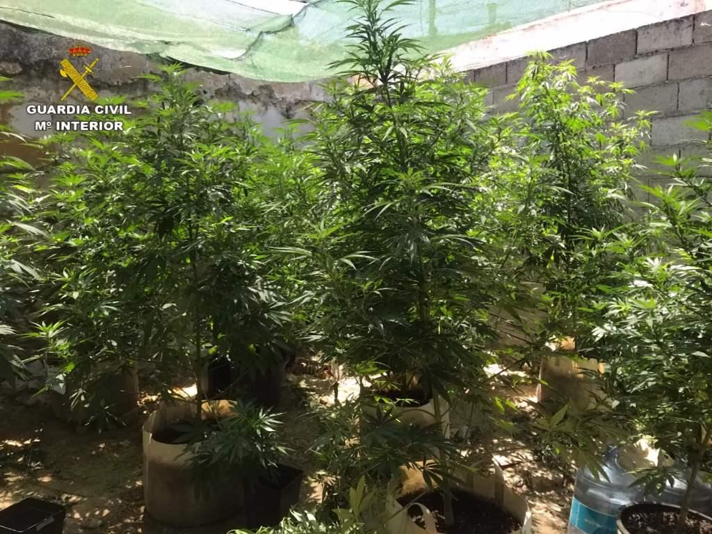 La Guardia Civil detiene a dos personas por cultivo de marihuana en Saelices