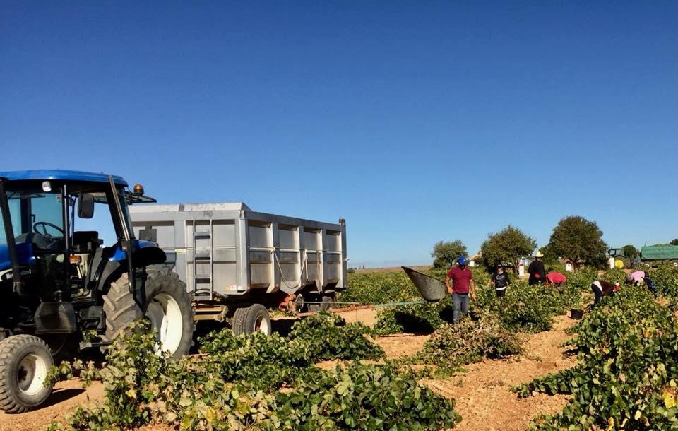 ASAJA CLM alerta a los agricultores para que no entreguen su uva sin los contratos cumplimentados y firmados