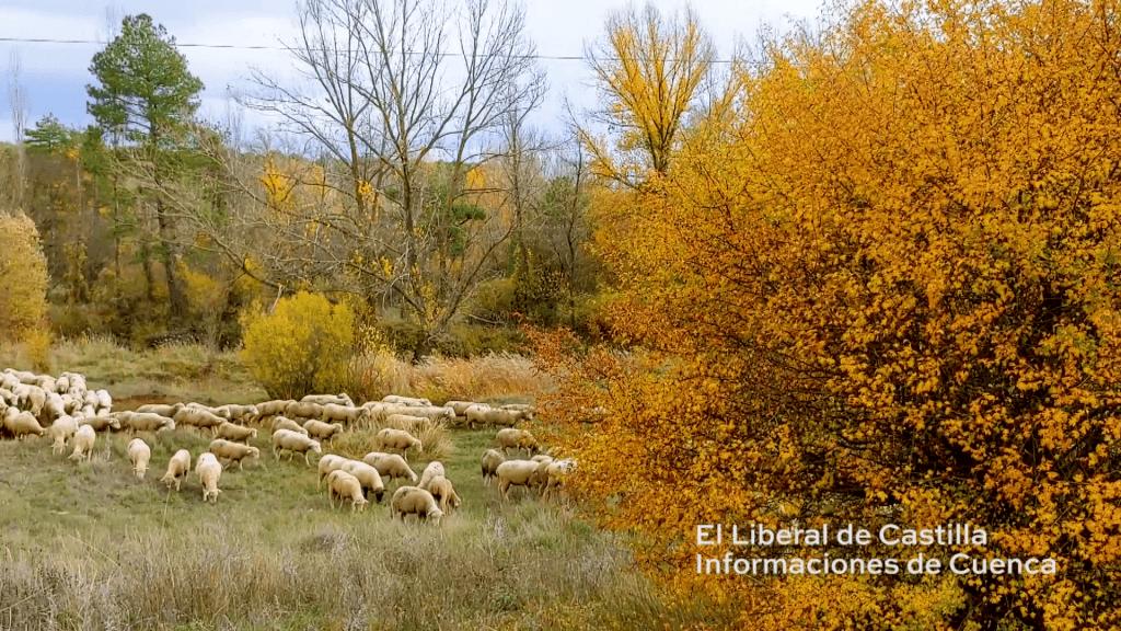 vlcsnap 00159 | Informaciones de Cuenca