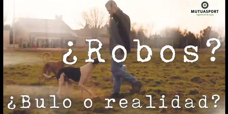 El robo de galgos triplica al de abandonados y supone ya un problema para cazadores y perros