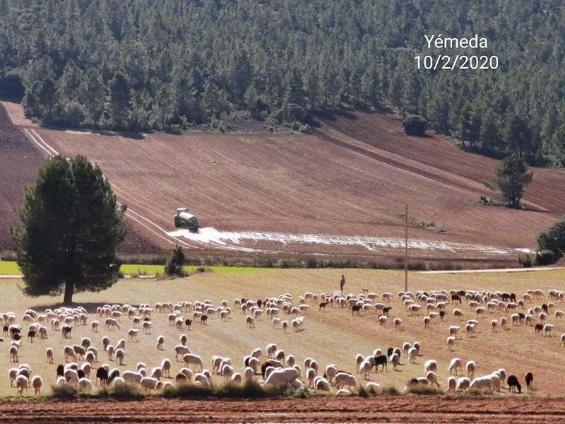 Pueblos Vivos Cuenca denuncia que se han vertido purines de manera ilegal en Yémeda y Mariana