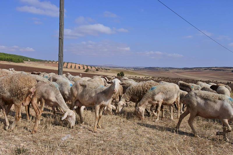 El Gobierno recuerda que la agricultura, ganadería, pesca, industria alimentaria y sus actividades relacionadas son servicios esenciales