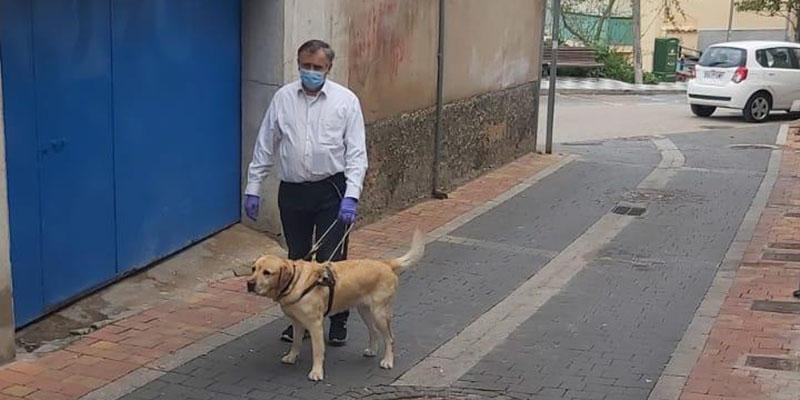 Más de 4 perros guía permiten a las personas ciegas de Cuenca seguir siendo autónomas durante el confinamiento