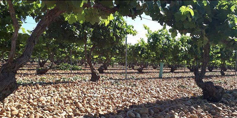 Castilla-La Mancha suscribe la propuesta de la AREV de solicitar a la Comisión Europea un presupuesto extraordinario para la recuperación urgente del mercado del vino
