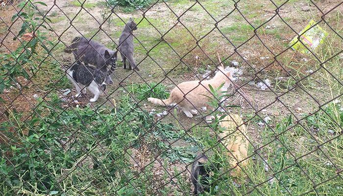 El PP pedirá que la Diputación de Cuenca amplíe el actual servicio que presta el Albergue de Animales a la gestión de colonias de gatos