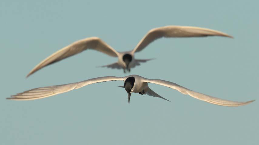 Investigadores del IREC advierten de los efectos negativos de los plaguicidas organoclorados sobre la salud reproductiva de las aves