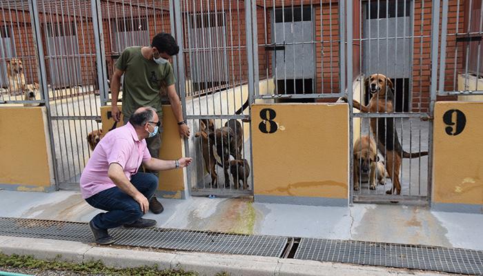 El Albergue de Animales de Cuenca consigue que en el último año un centenar de perros encuentren una familia