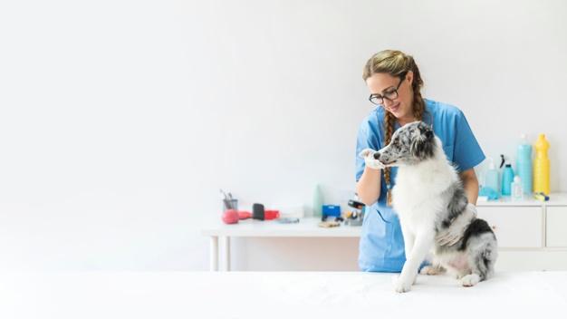 La Guardia Civil investiga a una persona por un supuesto delito de intrusismo profesional en una clínica veterinaria de Cuenca
