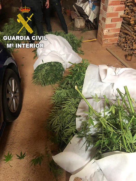 La Guardia Civil de Cuenca detiene a una persona por un delito de cultivo y elaboración de drogas tóxicas