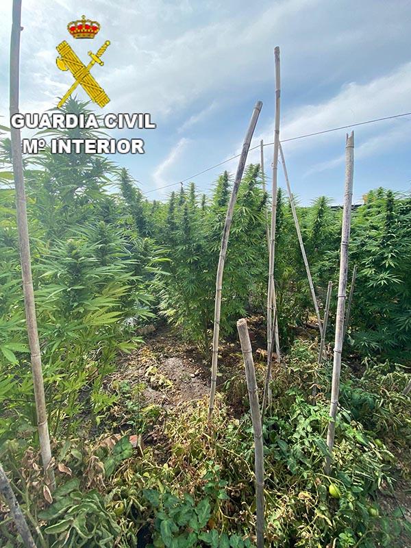La Guardia Civil investiga a una persona por un delito de cultivo y elaboración de drogas en Barajas de Melo