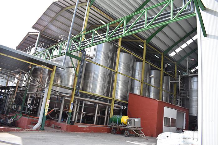 El Gobierno regional aplaude el desarrollo de la campaña de vendimia y destaca el abono de 6.6 millones de euros en ayudas a la reestructuración del viñedo en Cuenca