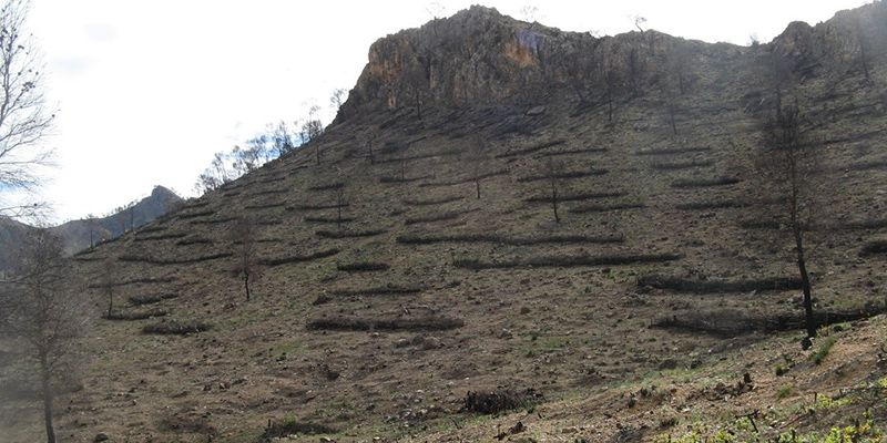 La aplicación de medidas de restauración inmediatas tras un incendio forestal disminuye su impacto ecológico