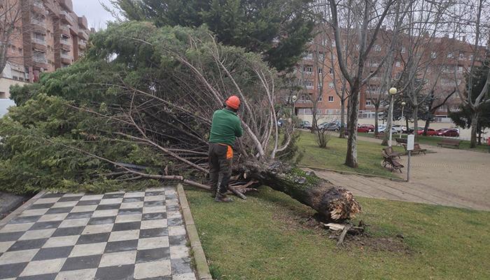 Los servicios municipales atienden más de una veintena de incidencias por el fuerte viento en Cuenca