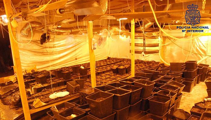 La Policía Nacional desmantela el centro de cultivo y producción de marihuana más importante de Cuenca