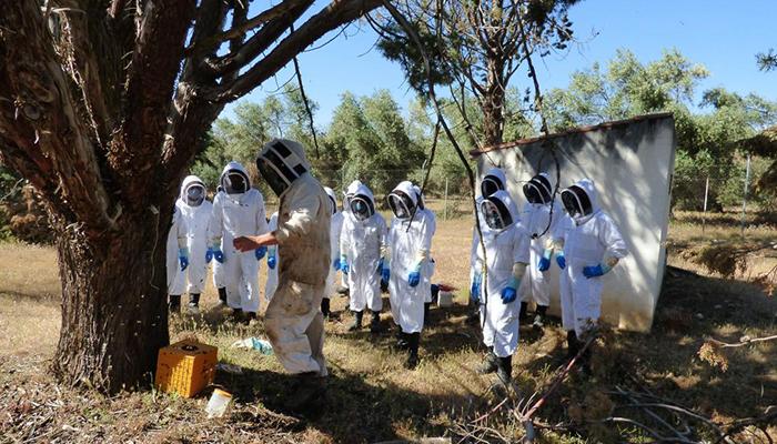 Efectivos del cuerpo de bomberos aprenden a retirar enjambres de abejas en el entorno urbano