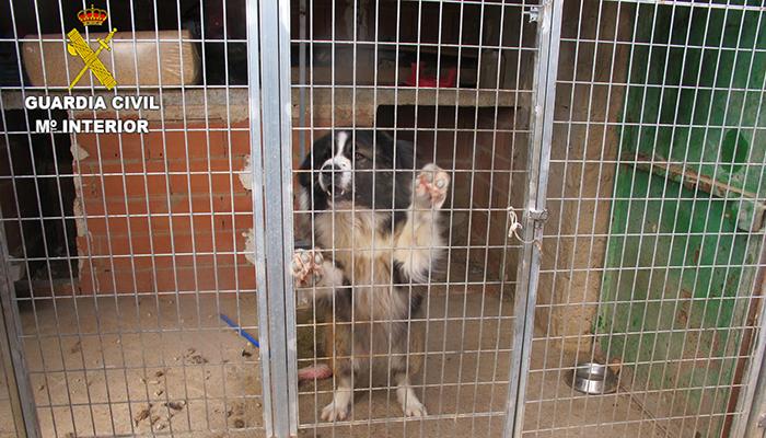 La Guardia Civil investiga a una persona en Valverde de Júcar por tener varios perros en un estado lamentable