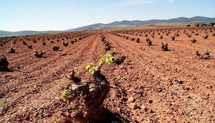 Castilla-La Mancha abona este viernes más de tres millones de euros de reestructuración de viñedo de los que se beneficiarán 372 viticultores